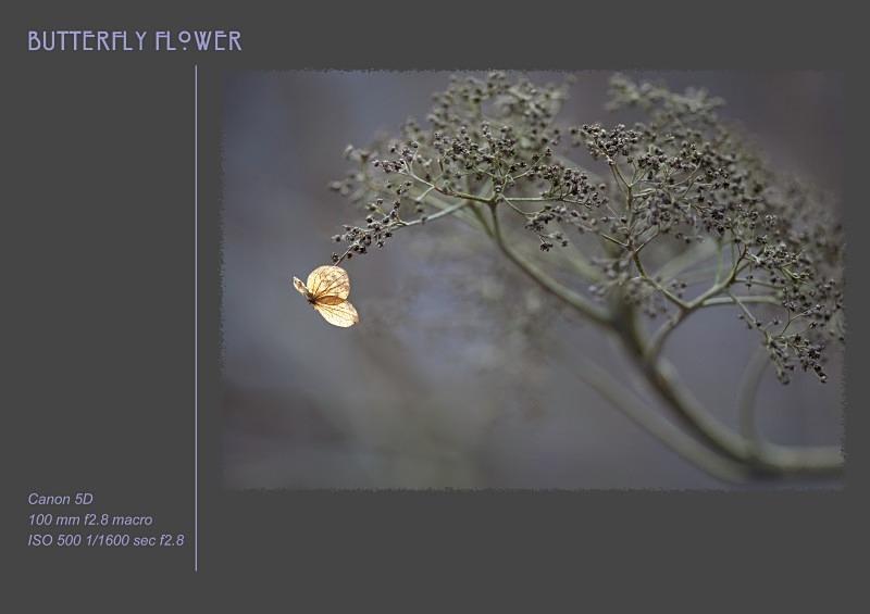 butterfly flower - Fine Art & Still Life