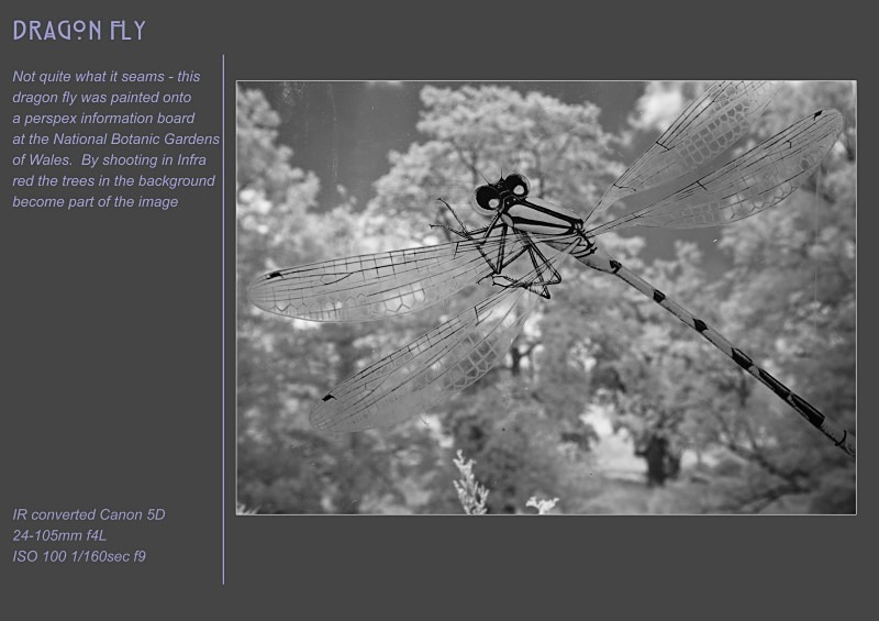 dragon fly - Alternative Realities