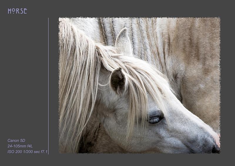 horse - Fine Art & Still Life