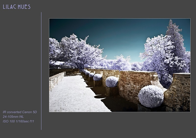 lilac hues - Alternative Realities