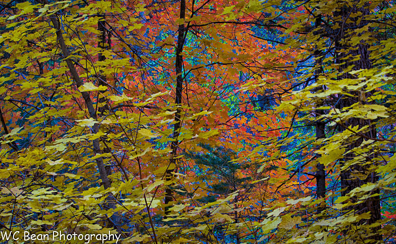 Fall Colors Mosaic - Favorite Images of 2013