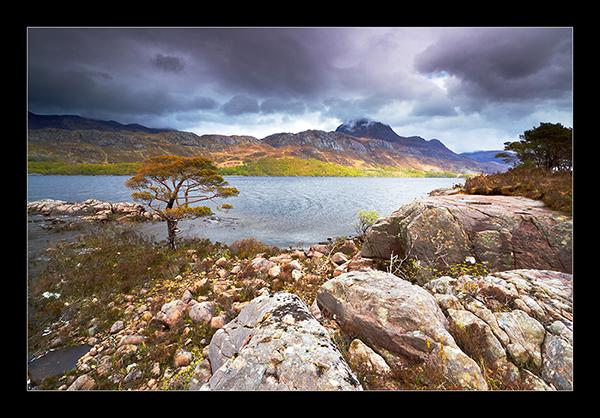 Loch Maree Tree - Mainland Scotland