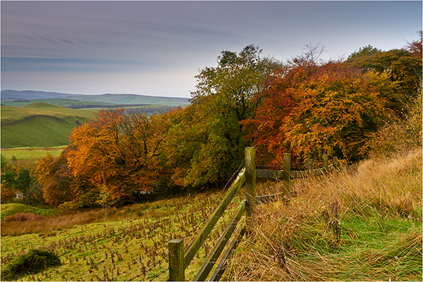 Autumn Leaves - Derbyshire