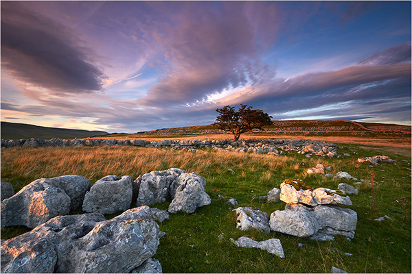 The Lone Tree - Yorkshire