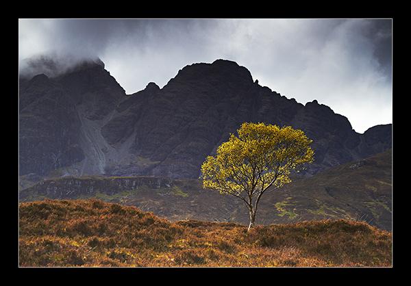 The Wee Tree - Isle of Skye