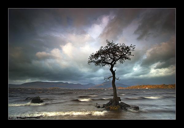 The Tree - Mainland Scotland