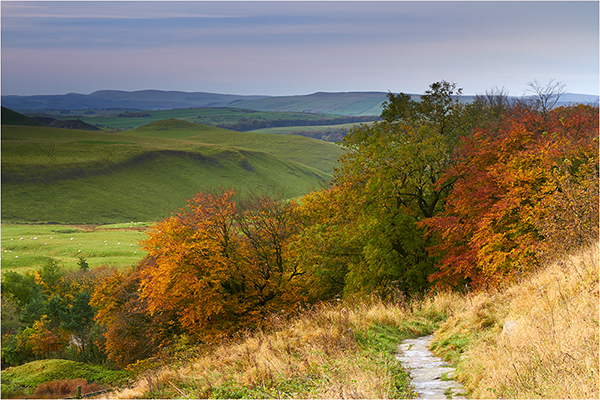 Autumn Tones - Derbyshire