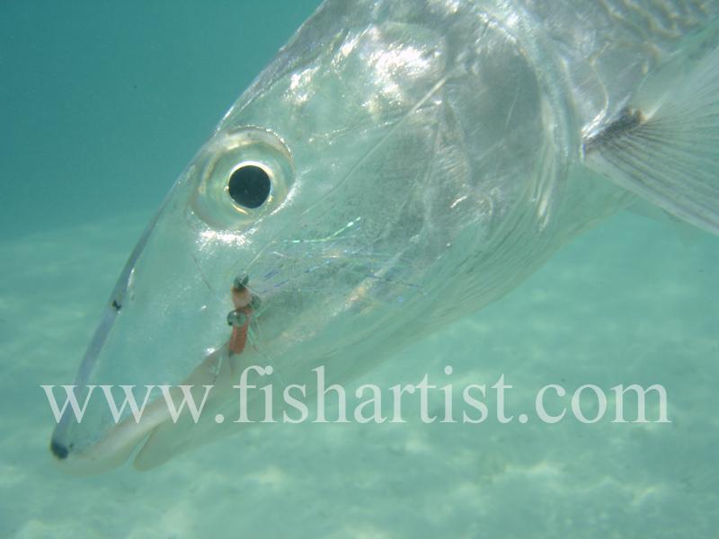 Bonefish Photo - Underwater bonefish head. - Bonefish & Tarpon.