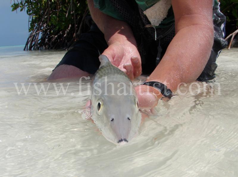 Head On Bonefish 2010. - Bonefishing 2010.