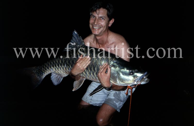 60lb Golden Mahseer. - Mahseer Fishing India.