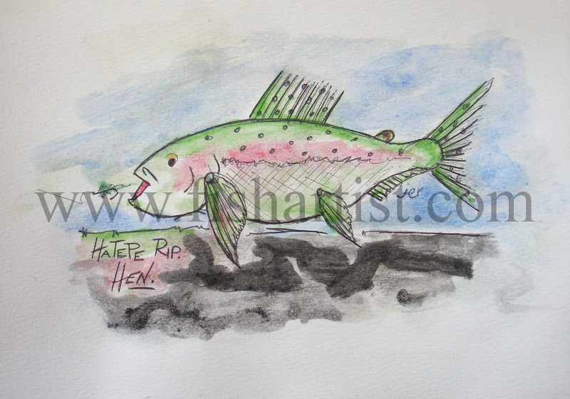 Taupo Rainbow Hen Watercolour. - Watercolours of Taupo Trout.