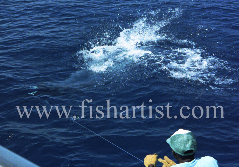 Wireman. - Marlin Fishing.