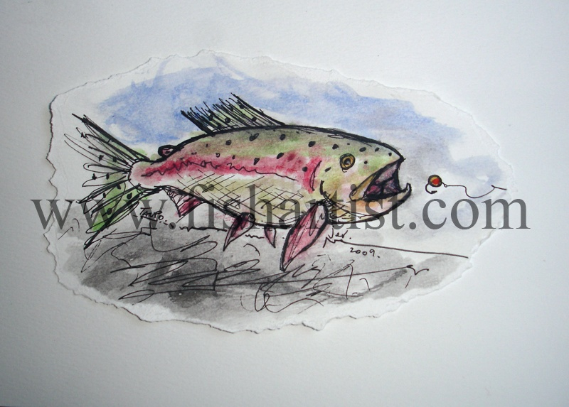 Taupo Heave & Leave Trout Watercolour. - Watercolours of Taupo Trout.