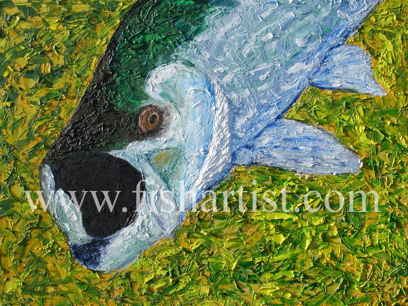 Tarpon. - Fish Art for Fishermen.
