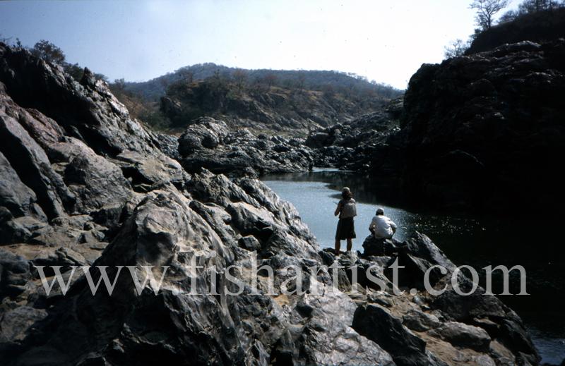 Mahseer Fishing. - Mahseer Fishing India.
