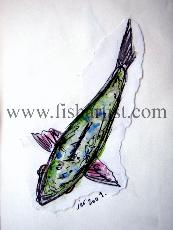 Taupo Rainbow Trout Watercolour. - Watercolours of Taupo Trout.