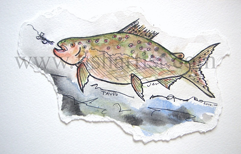 Waitahanui Brown Trout Hen Watercolur. - Watercolours of Taupo Trout.