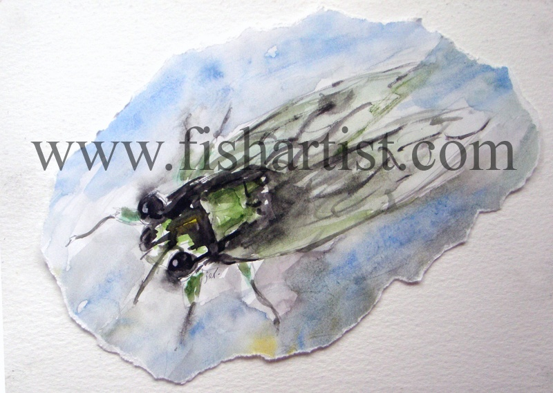 Taupo Cicada Watercolour. - Watercolours of Taupo Trout.