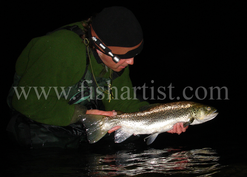 Lake Taupo Brown Trout. - Trout Fishing - Taupo New Zealand.