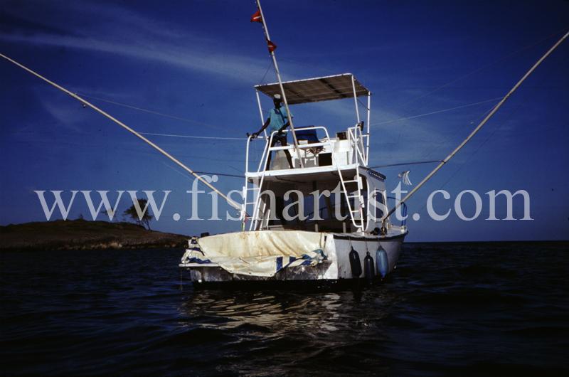 Marlin Boat. - Marlin Fishing.