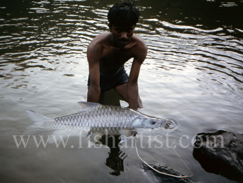 Silver Mahseer with Guide. - Mahseer Fishing India.