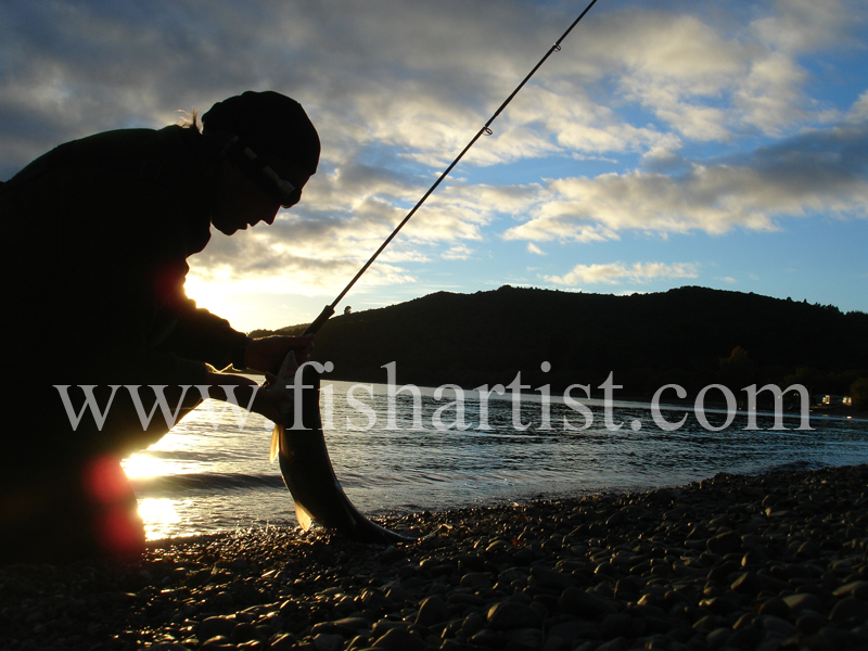 Dawn Caught Trout. - Trout Fishing - Taupo New Zealand.