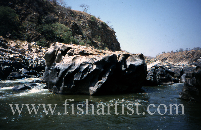 Cauvery River Boulder. - Mahseer Fishing India.