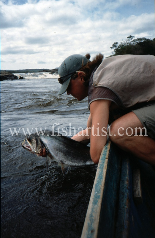 - Payara of the Amazon Rivers.