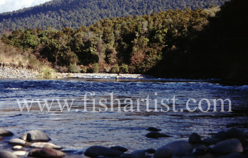 Cattle Rustlers Pool. - Trout of the Tongariro River.