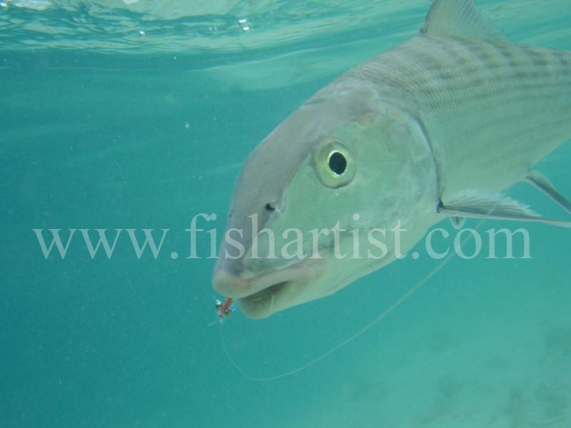 Bonefish Photo - Underwater bonefish and Fly. - Bonefish & Tarpon.