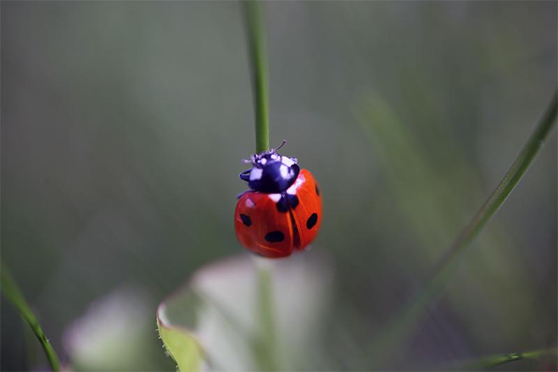 - Flora & Fauna