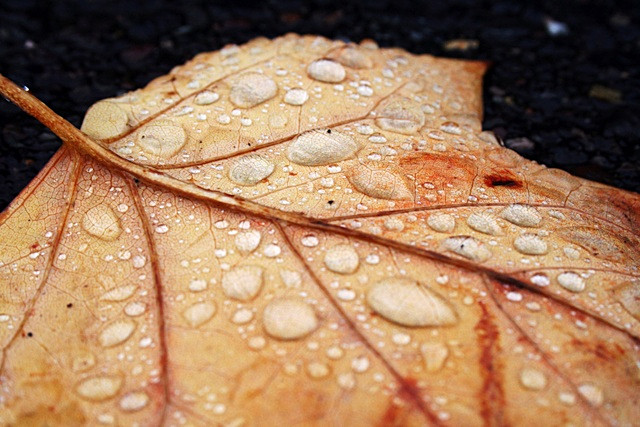 Fresh Fall - Fauna and Flora