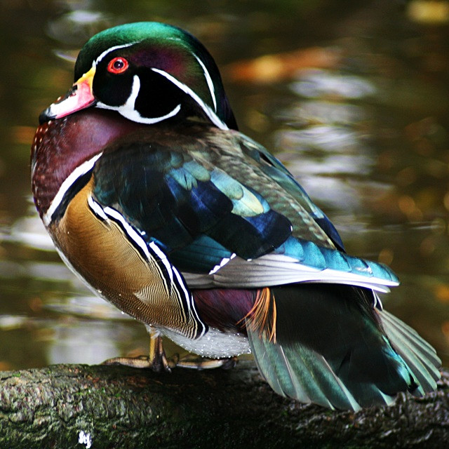 Feathered Jewel - Fauna and Flora