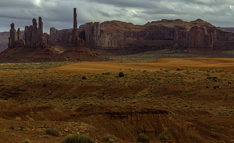 Mustangs in the Canyon - Monument Valley