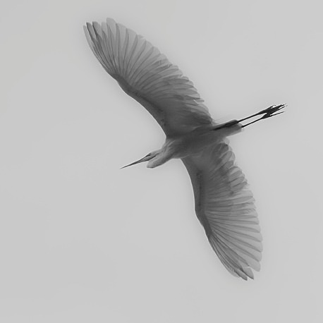 Egret - The Wild Side