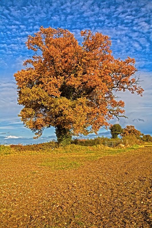 The Oak on the corner - Kings Langley set