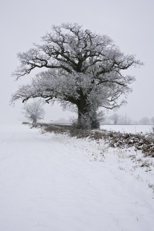White Oak, Barnes Lane - Kings Langley set