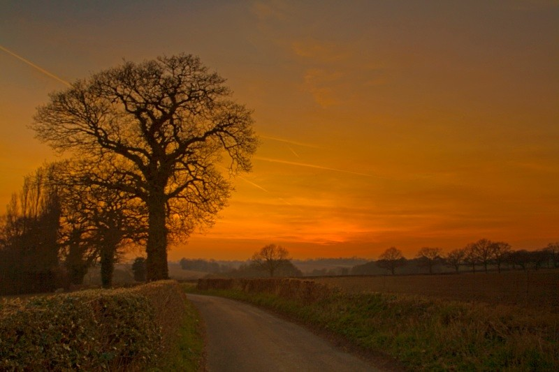 The Oak and the Winter Evening - Kings Langley set
