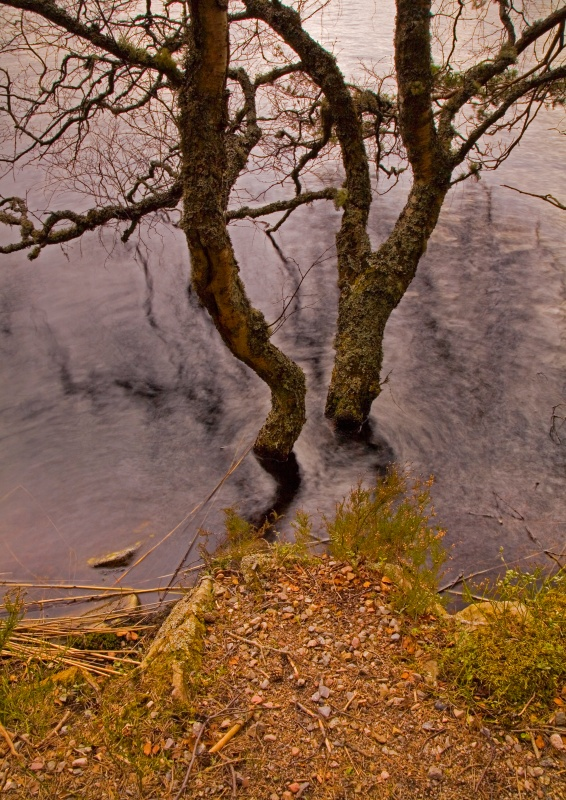 Swimming Trees - Scotland