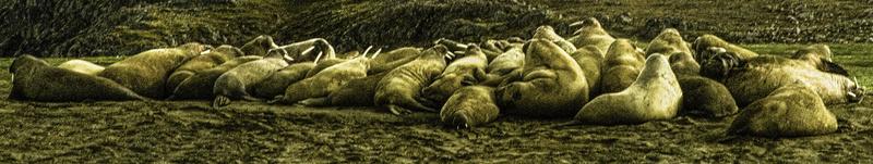 Beach Bums! - The Arctic