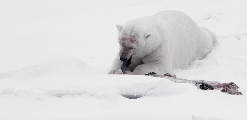 Life & Death in the Arctic - The Best Images