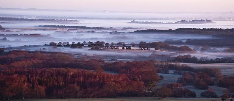 Morning mists over Arne Forest