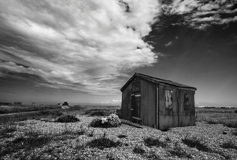 - Dungeness