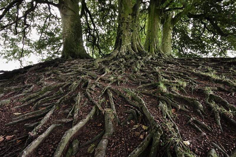 Sacred Trees II, Avebury - The Memory of Trees