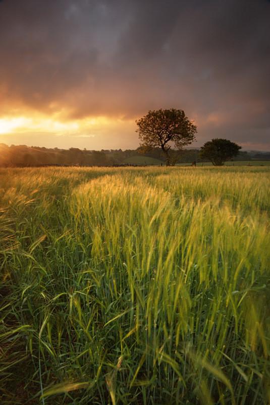 Little Longstone - Woods and Farmland
