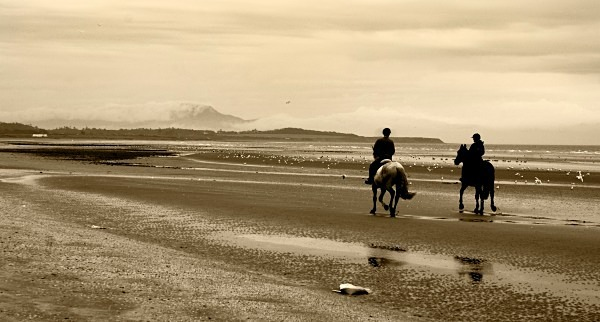 horses on beach sepia cropped - Landscapes