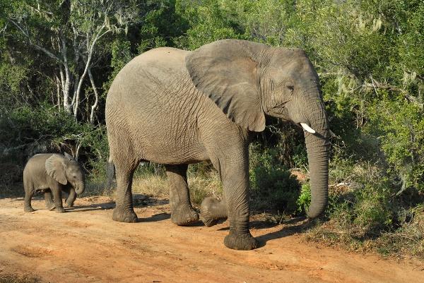 Elephant photo Andy Spearman
