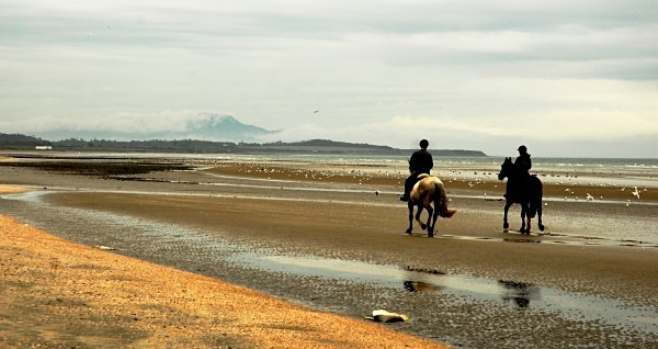 horses on beach cropped - Landscapes