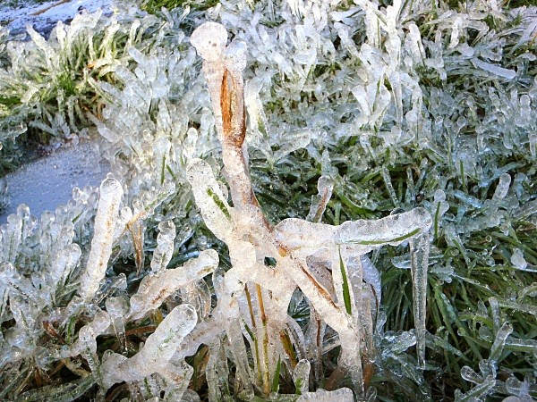 ice grass - Landscapes
