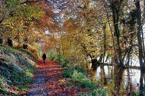 towpath - Landscapes